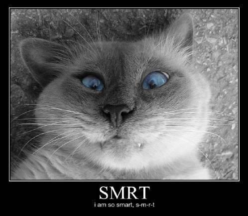 S+m+r+t+_9ec04b_8346