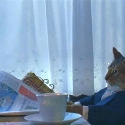newspaper-cat-realization