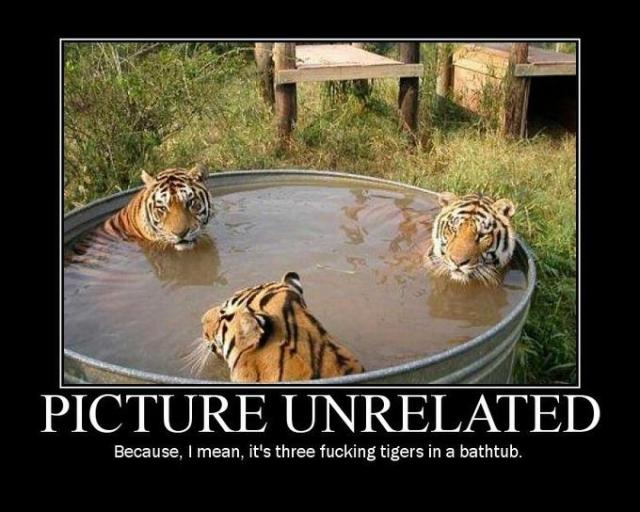 pic unrelated - three tigers - Copy